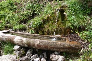 Naturpädagogik und Umweltbildung