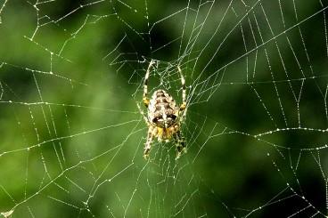 Felstoristen und Zukunfts-Spinnerinnen